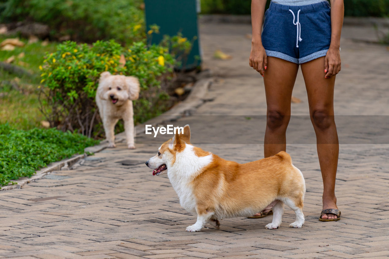 LOW SECTION OF PERSON WITH DOG ON FOOTPATH