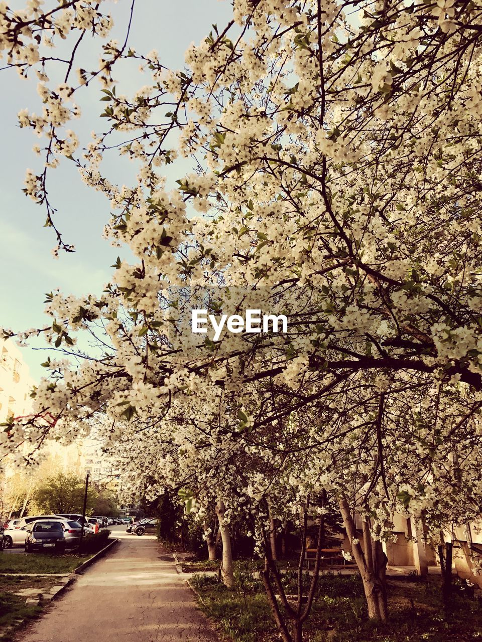 tree, blossom, flower, branch, beauty in nature, growth, nature, fragility, springtime, no people, outdoors, day, sky, freshness