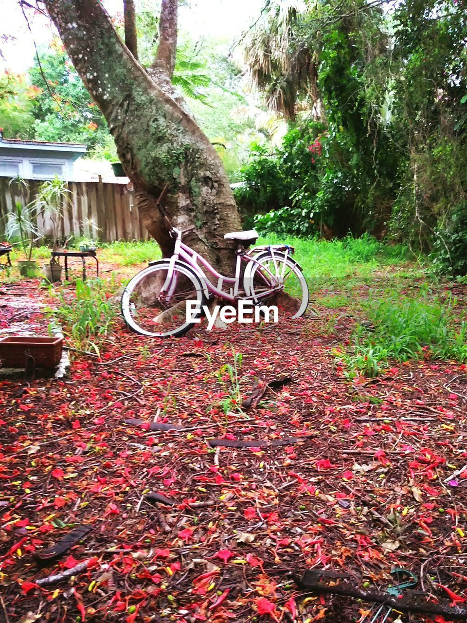 autumn, leaf, change, nature, bicycle, growth, no people, outdoors, tree, day, grass, beauty in nature