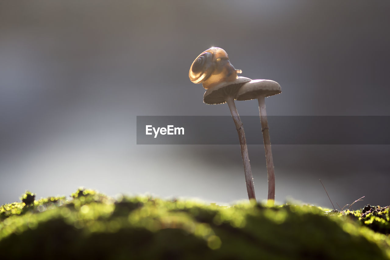 selective focus, plant, nature, close-up, growth, no people, day, beauty in nature, plant stem, sunlight, freshness, mushroom, outdoors, fungus, fragility, mollusk, plant part, food, leaf, vulnerability, toadstool