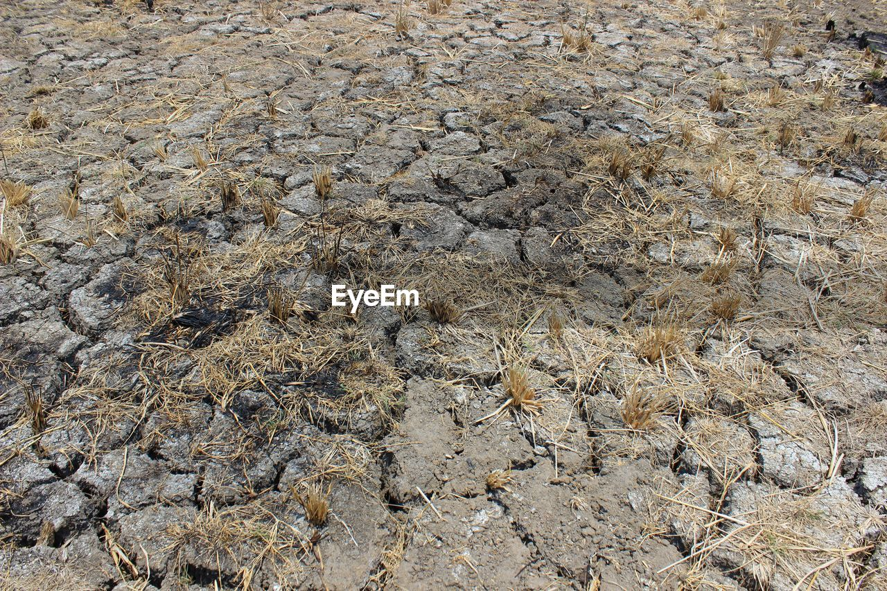 Extremely dry land