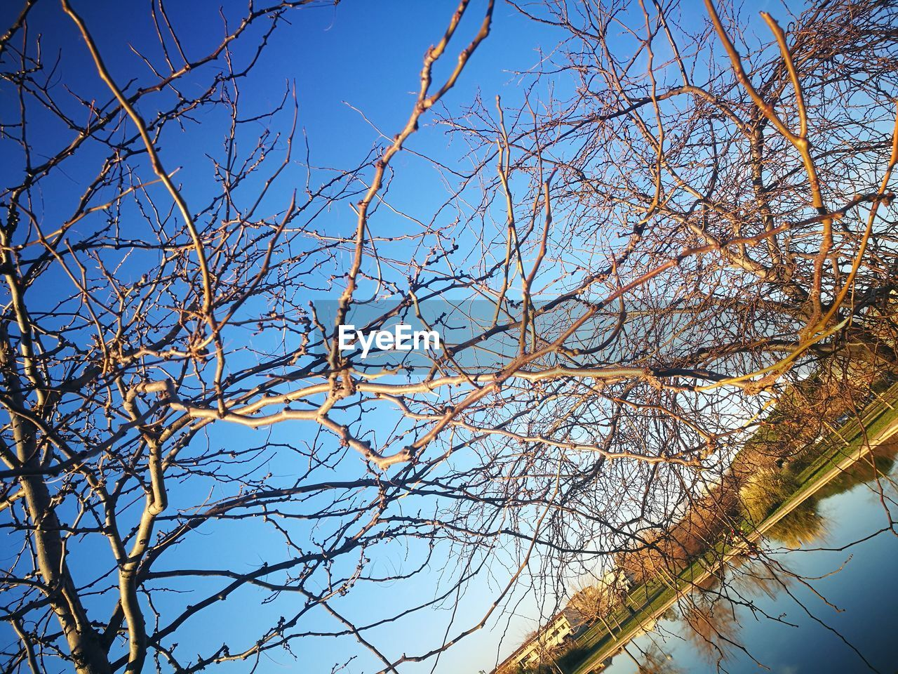 tree, branch, sky, low angle view, plant, nature, bare tree, tranquility, day, beauty in nature, no people, clear sky, outdoors, blue, growth, scenics - nature, sunlight, autumn, tree trunk, trunk