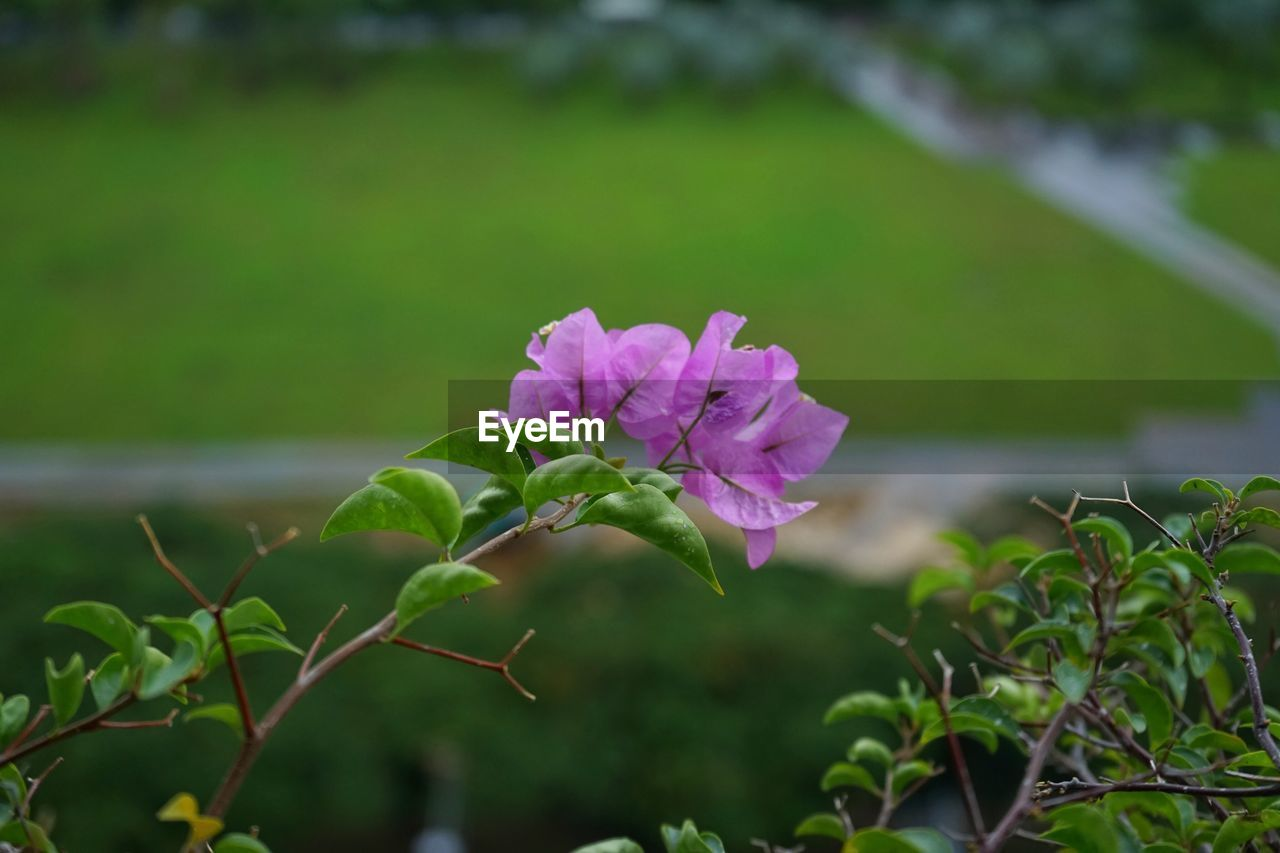flower, nature, plant, growth, beauty in nature, fragility, petal, freshness, focus on foreground, blooming, no people, outdoors, leaf, flower head, close-up, day