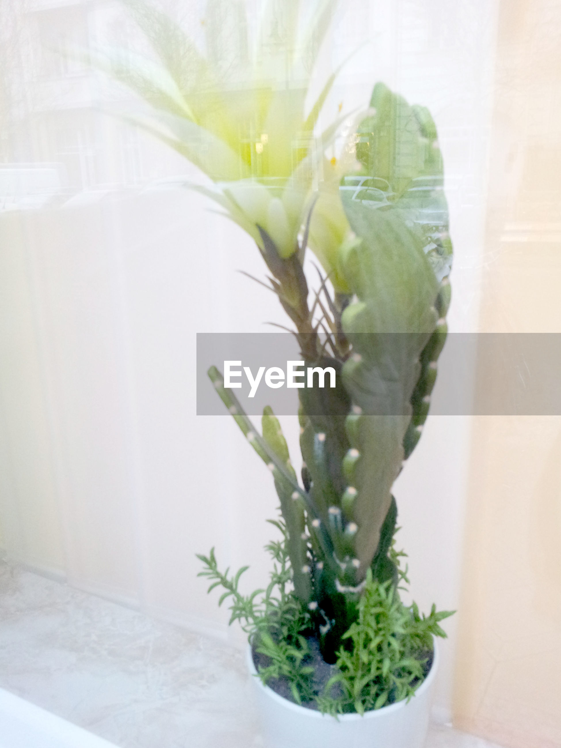 CLOSE-UP OF SUCCULENT PLANT IN SUNLIGHT