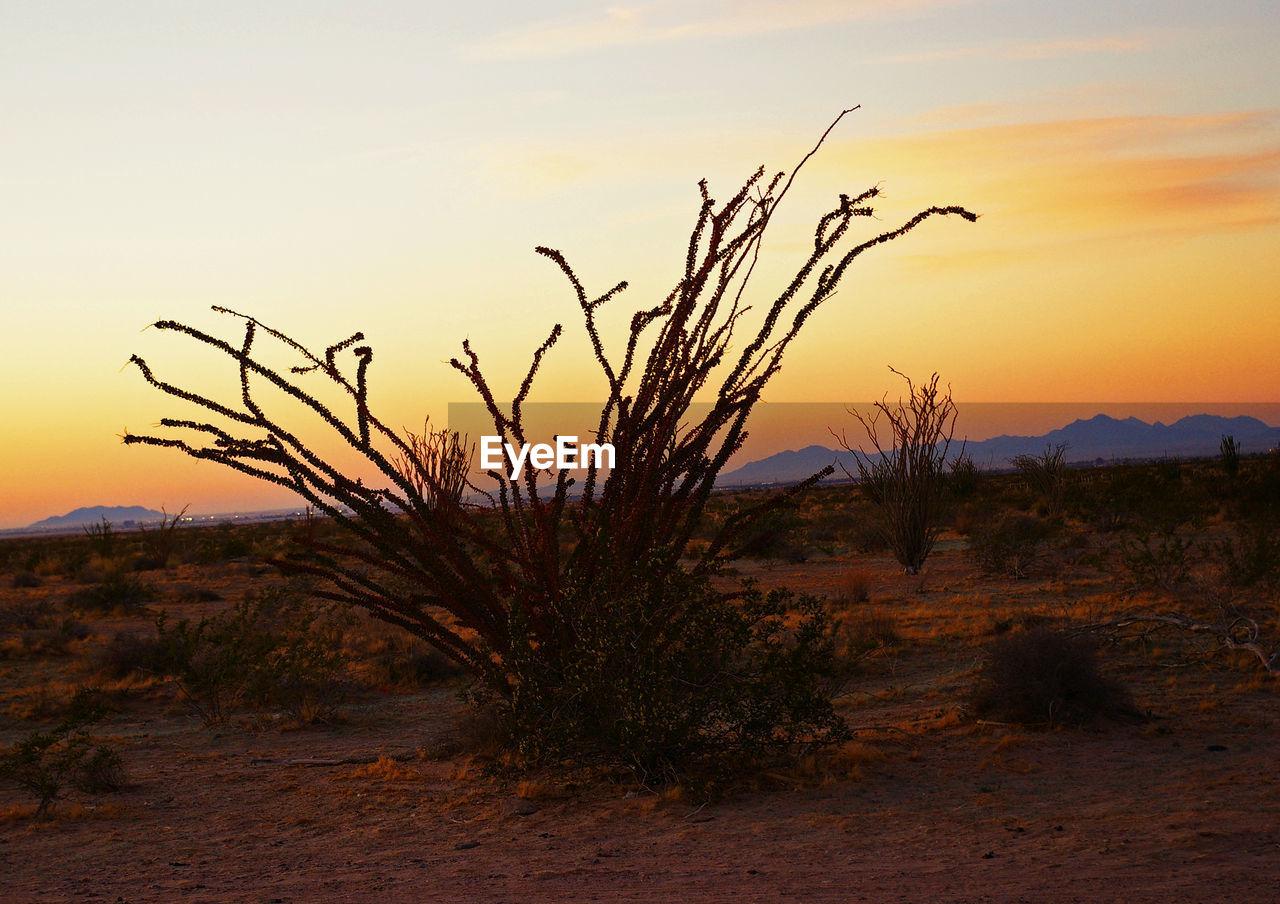 Plants On Landscape Against Sky At Sunset