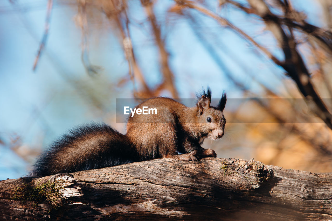 Low angle view of squirrel on branch
