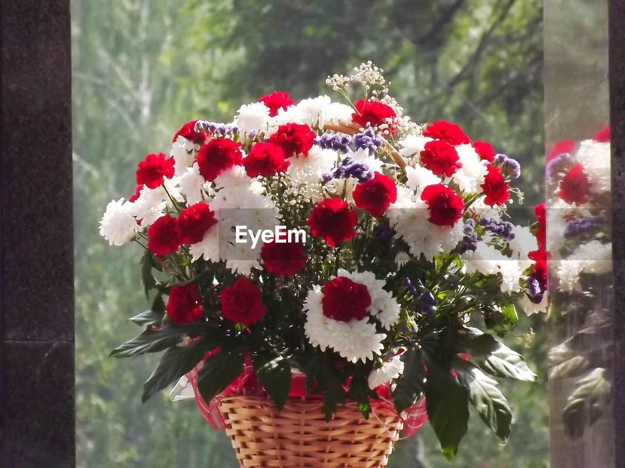 Red and white flowers in wicker basket by window