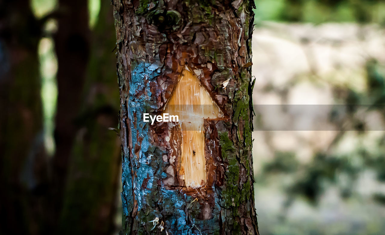 tree trunk, tree, focus on foreground, textured, day, tree stump, wood - material, nature, close-up, no people, outdoors, bark, rough, growth, forest
