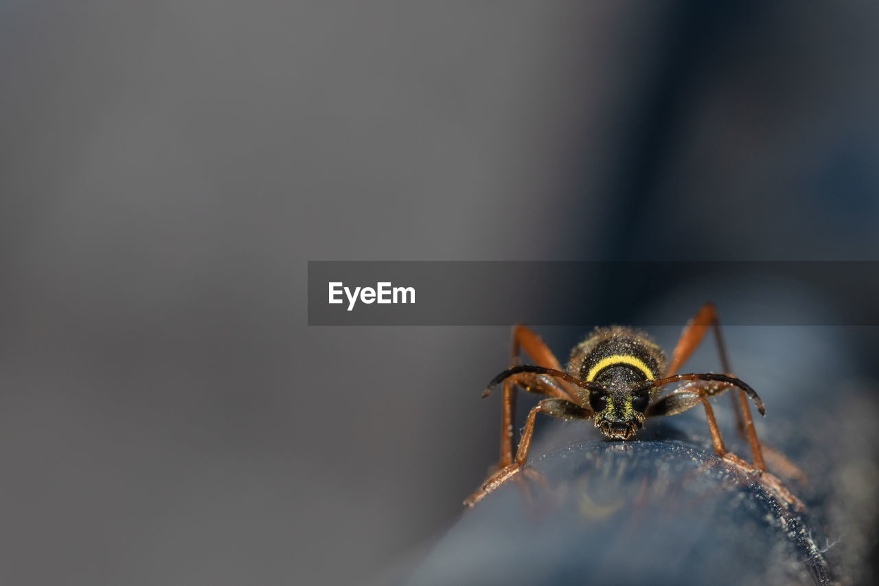 one animal, invertebrate, animal themes, animals in the wild, animal wildlife, insect, close-up, arthropod, animal, arachnid, spider, selective focus, zoology, jumping spider, animal body part, day, copy space, no people, animal leg, outdoors, animal eye