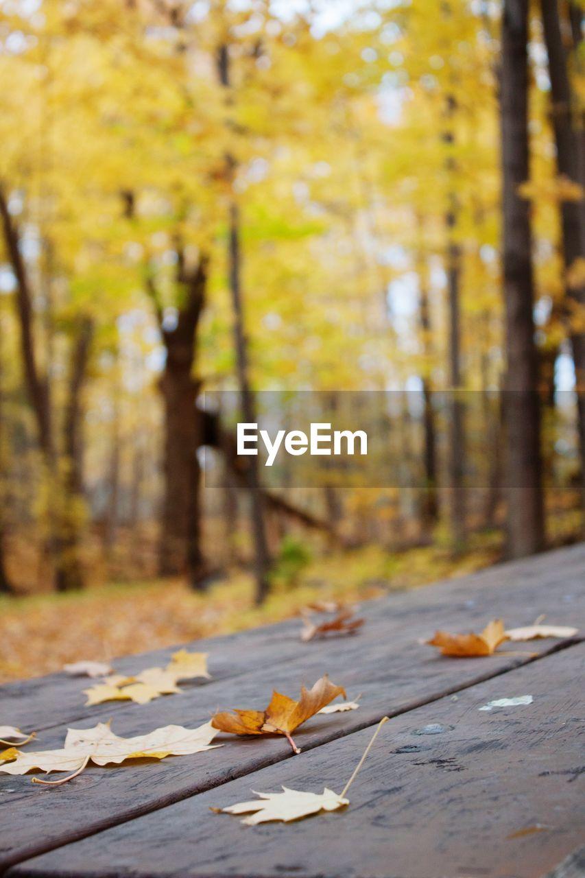 Fallen leaves on table