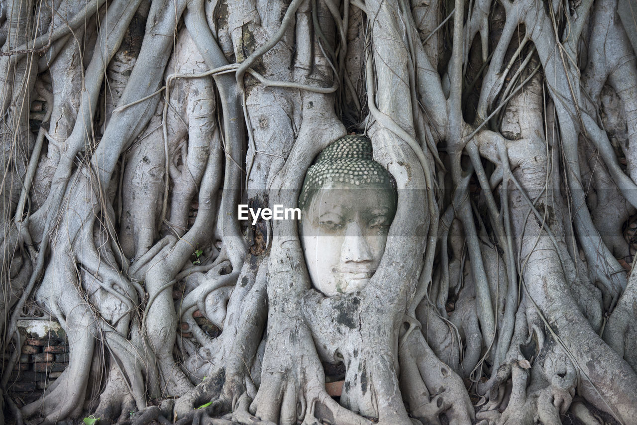 Buddha Sculpture Amidst Tree Roots At Wat Mahathat