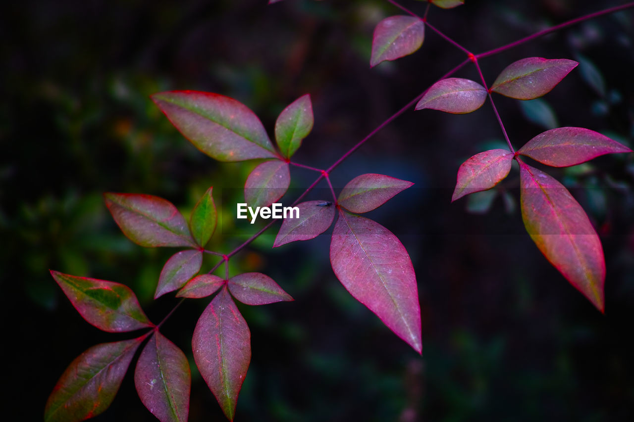 leaf, focus on foreground, nature, close-up, growth, beauty in nature, outdoors, day, no people, fragility, freshness, flower head, periwinkle