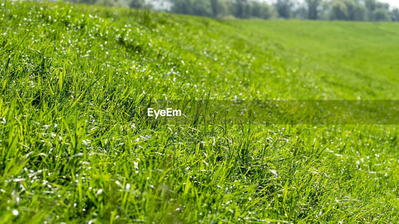 green color, plant, grass, beauty in nature, growth, land, field, landscape, nature, tranquility, no people, day, close-up, selective focus, environment, full frame, backgrounds, freshness, outdoors, scenics - nature, blade of grass