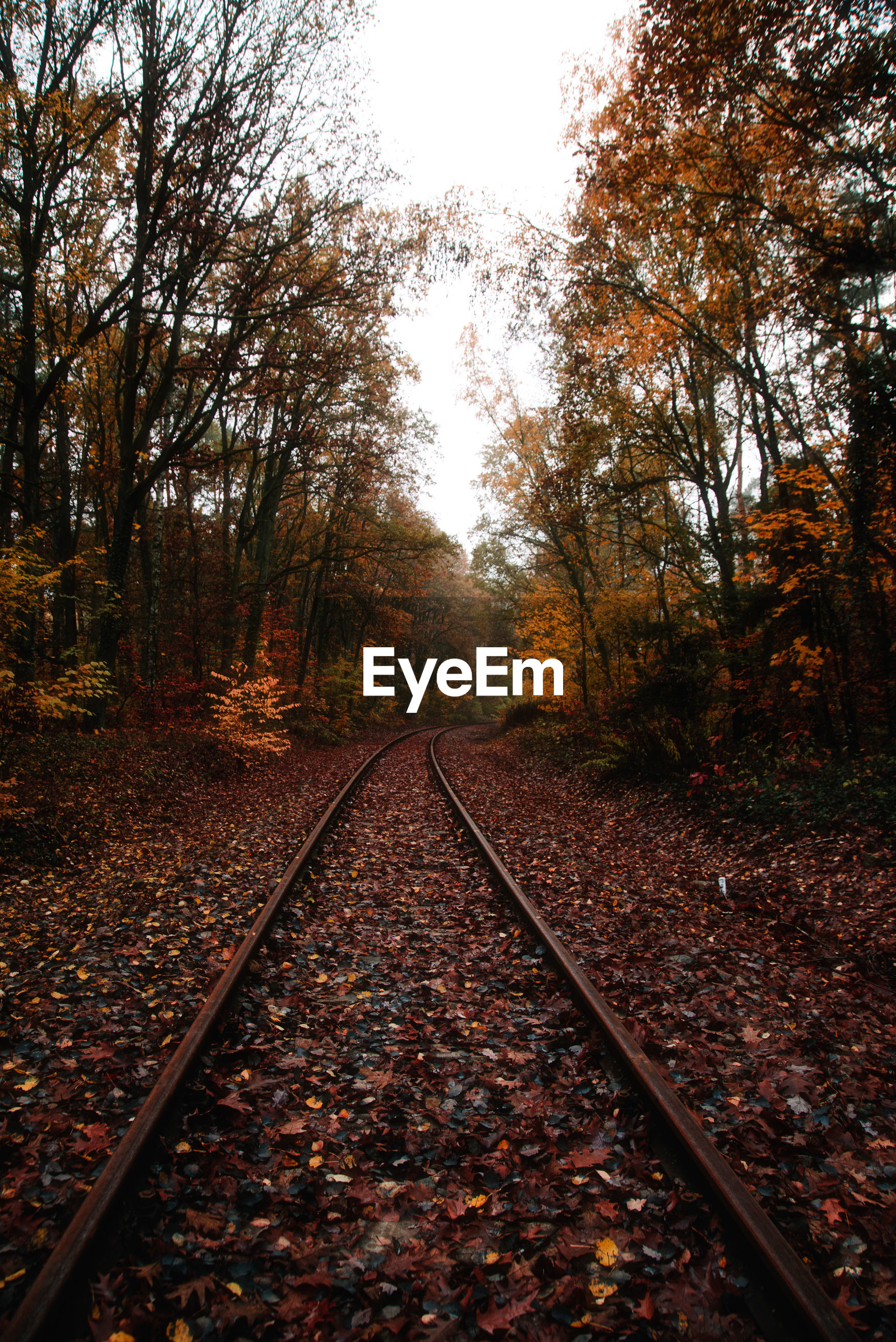 RAILROAD TRACK AMIDST TREES IN FOREST DURING AUTUMN