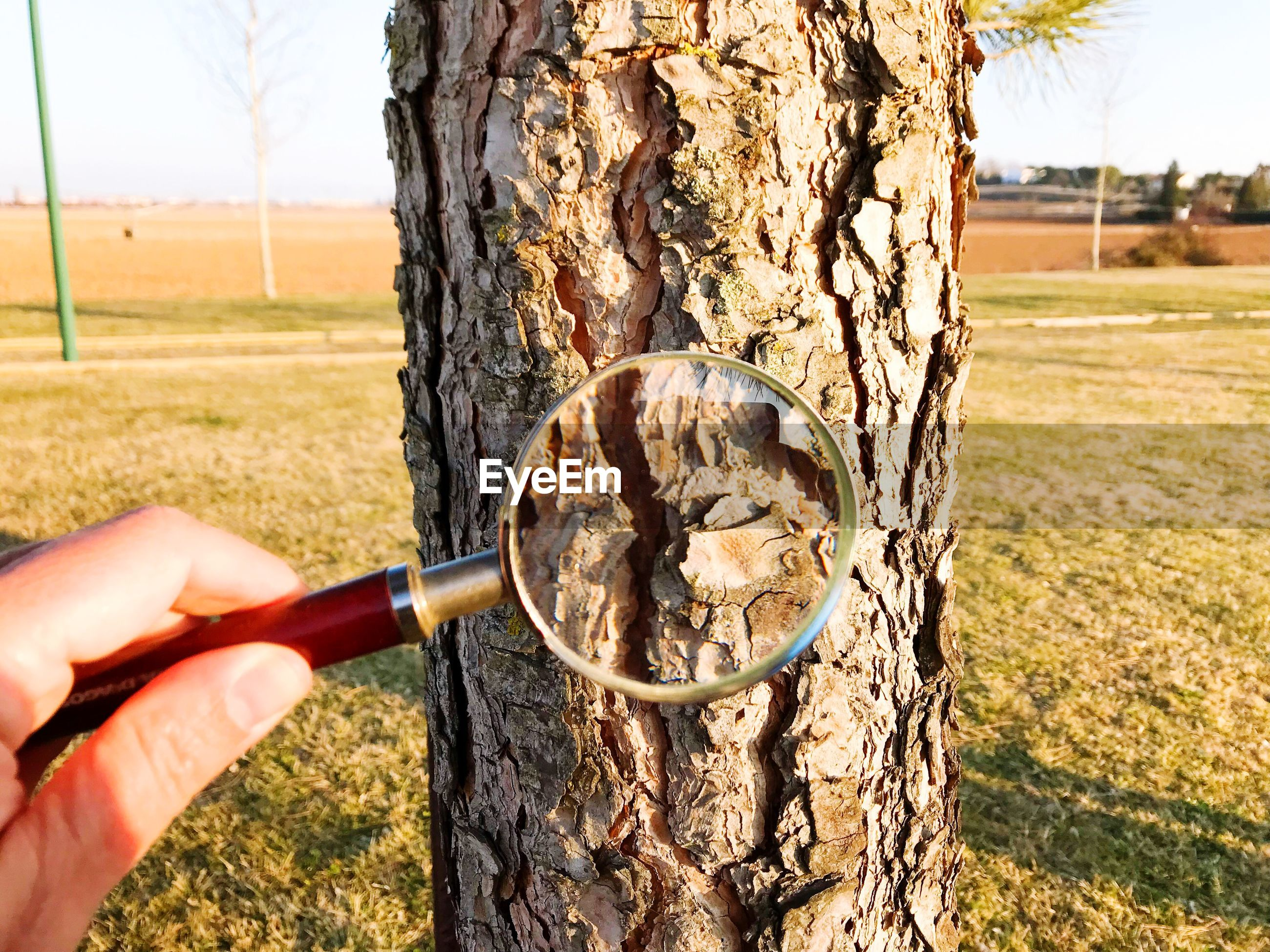 Cropped hand holding magnifying glass against tree trunk