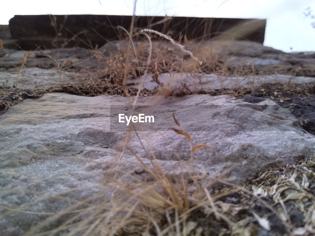 CLOSE-UP OF DRY PLANTS ON LAND
