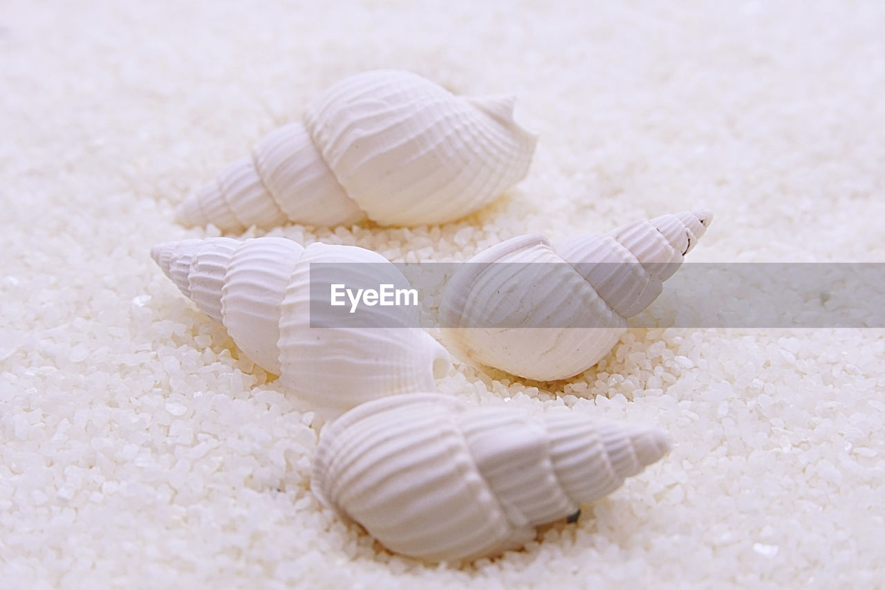 shell, seashell, close-up, no people, still life, animal wildlife, indoors, animal shell, selective focus, animal, white color, land, pattern, animal themes, sand, nature, group of objects, natural pattern, beauty in nature, beach