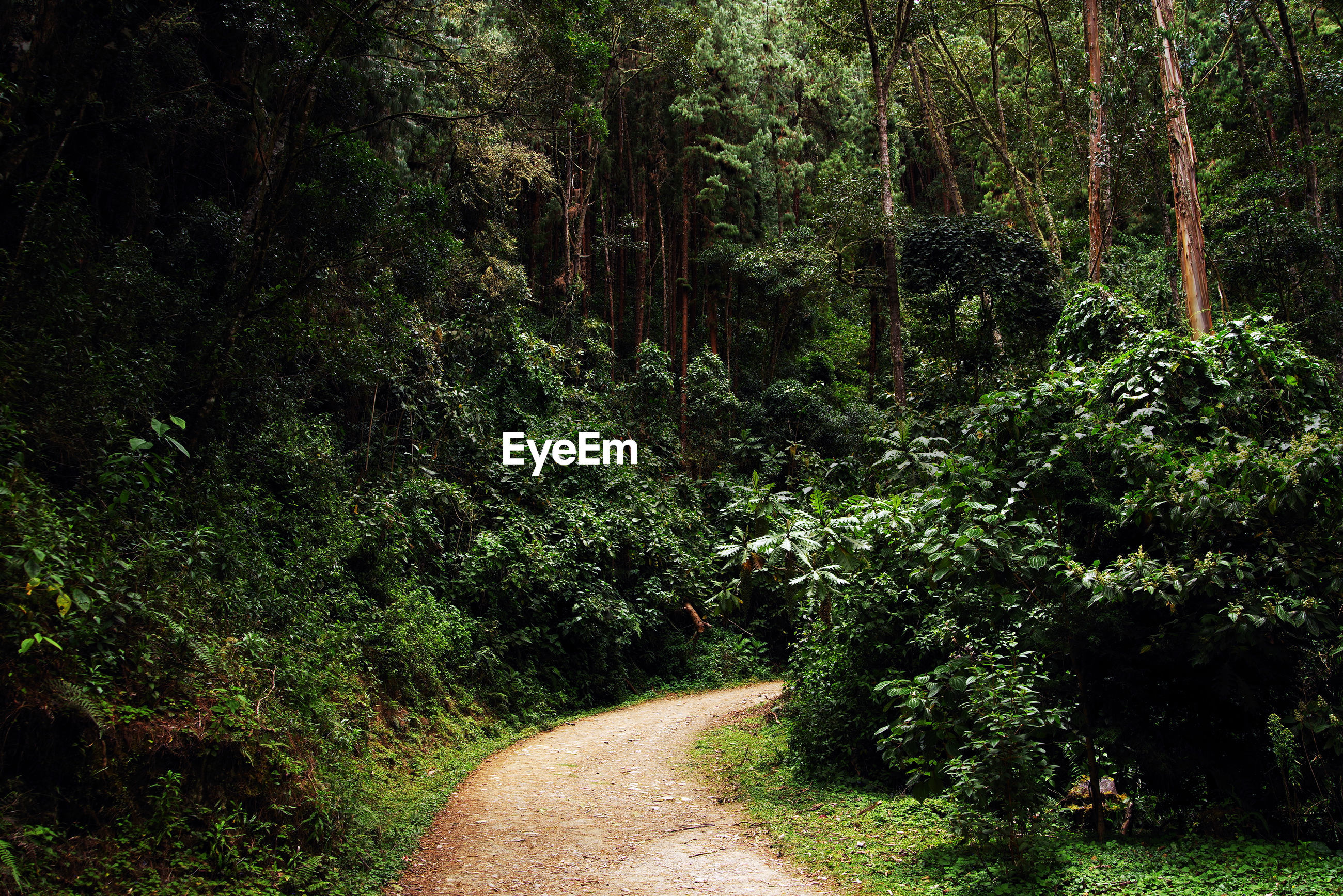 ROAD AMIDST TREES AND PLANTS IN FOREST
