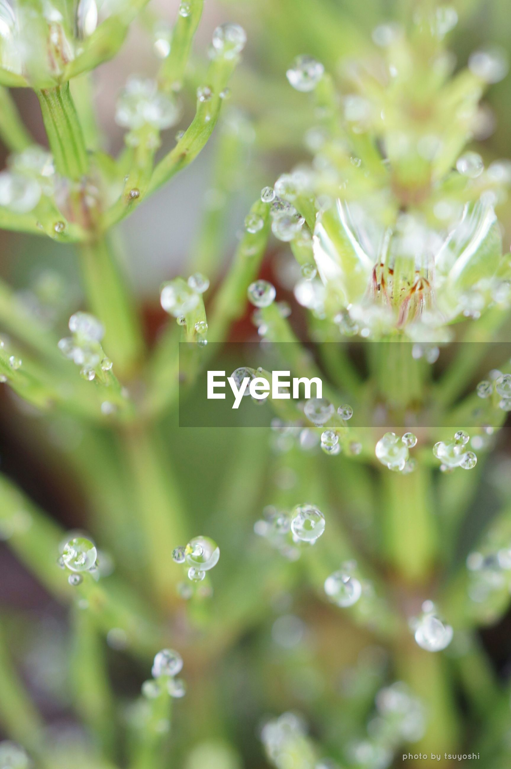 drop, freshness, water, growth, fragility, close-up, wet, beauty in nature, nature, flower, plant, focus on foreground, dew, selective focus, green color, leaf, purity, raindrop, day, droplet