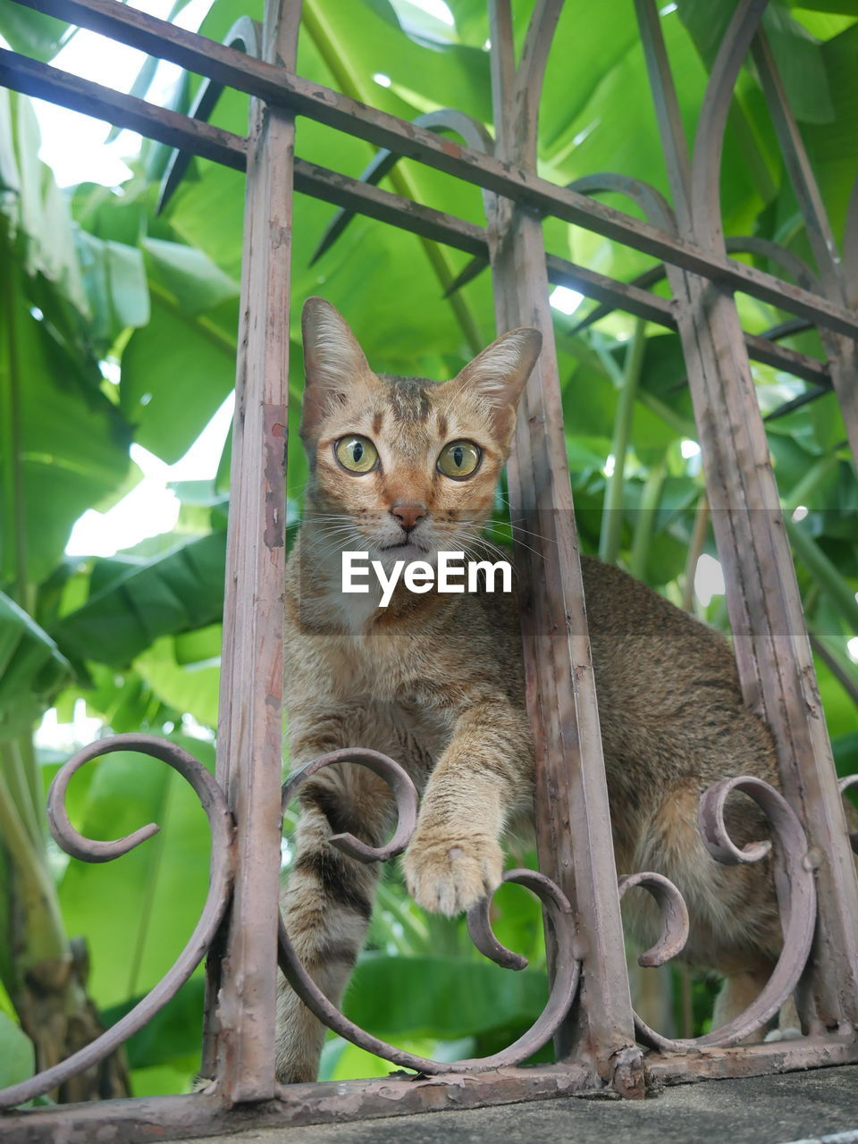 PORTRAIT OF CAT BY TREE