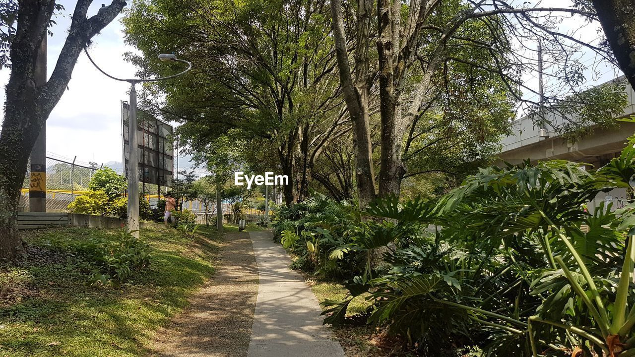 plant, tree, direction, the way forward, nature, growth, footpath, built structure, architecture, day, city, building exterior, outdoors, transportation, diminishing perspective, green color, incidental people, sky, street, long