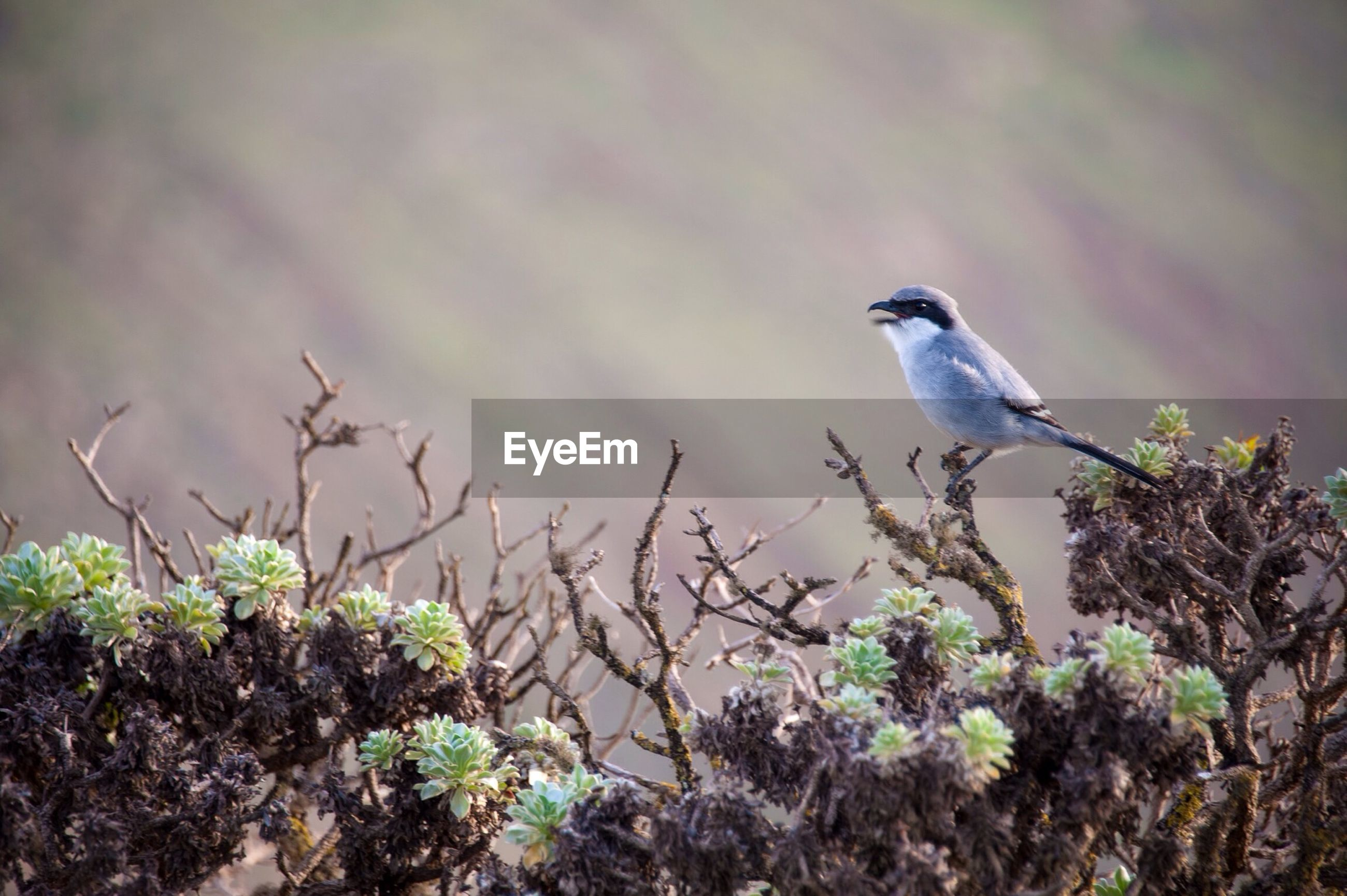 Close-up of bird perching on plant at field