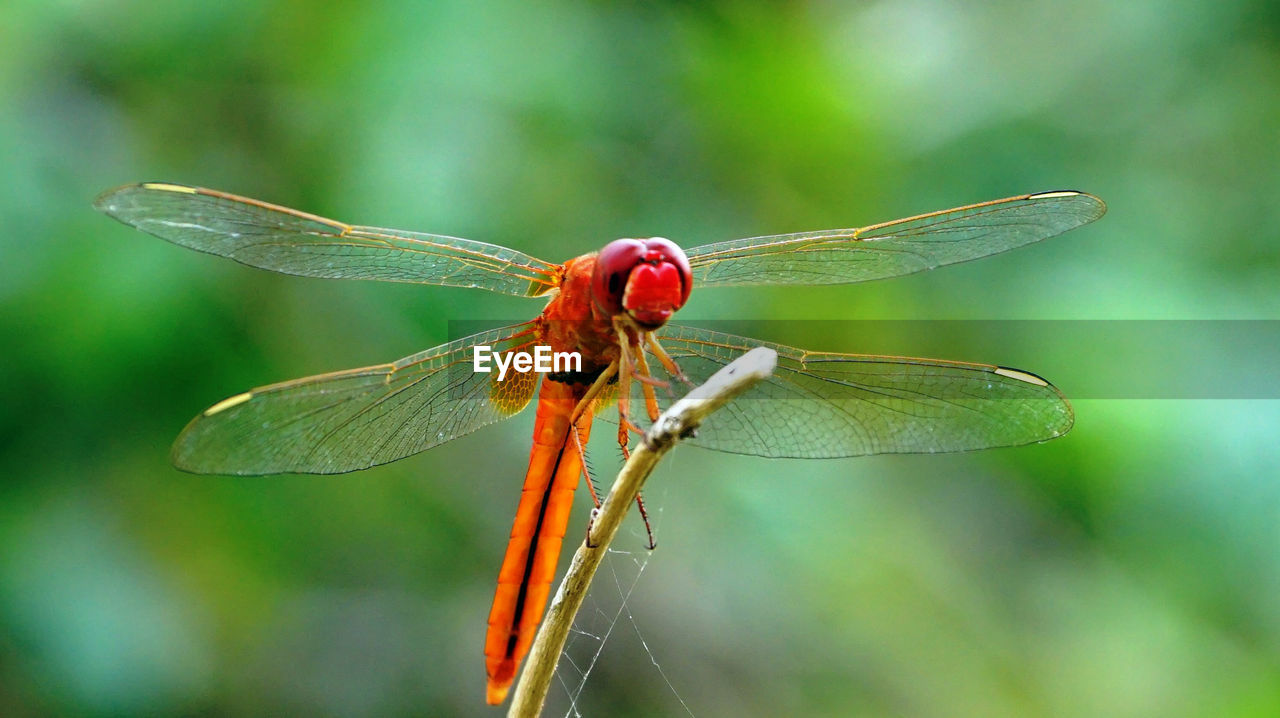 insect, invertebrate, animal themes, animals in the wild, animal wildlife, one animal, animal, animal wing, close-up, dragonfly, plant, focus on foreground, nature, day, no people, beauty in nature, green color, zoology, outdoors, plant part