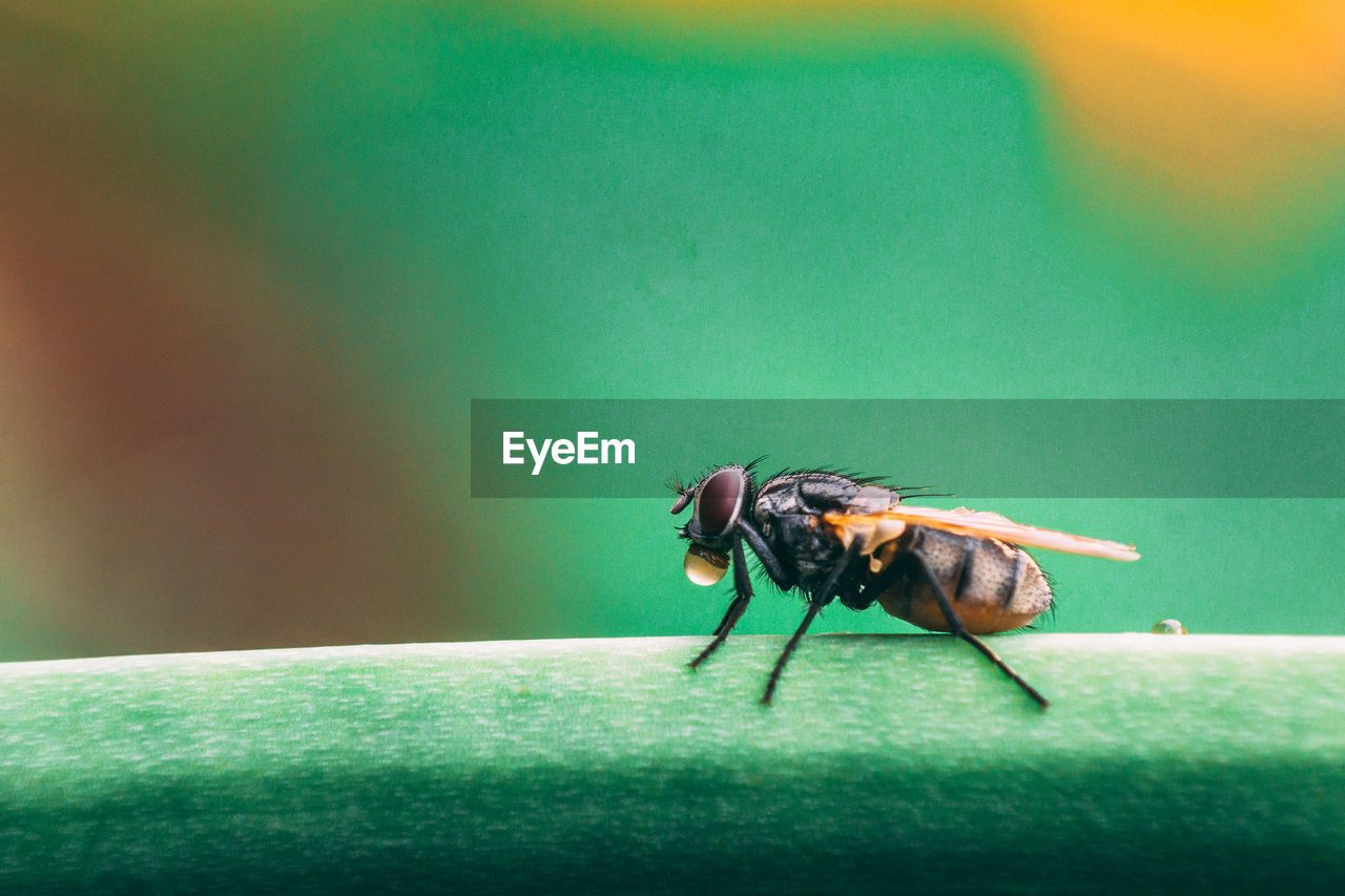 insect, invertebrate, animal themes, animal wildlife, animal, animals in the wild, one animal, close-up, green color, fly, nature, day, no people, focus on foreground, selective focus, animal wing, housefly, zoology, side view, leaf, animal eye