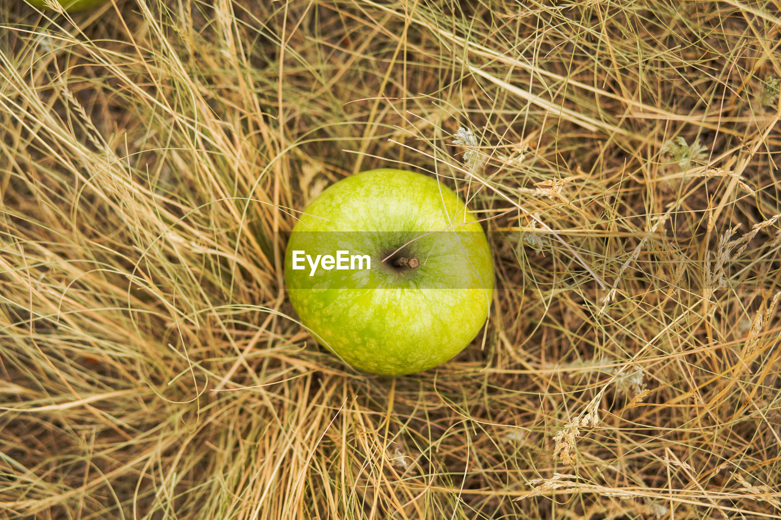 fruit, apple - fruit, food, food and drink, green color, healthy eating, grass, freshness, no people, nature, close-up, day, outdoors