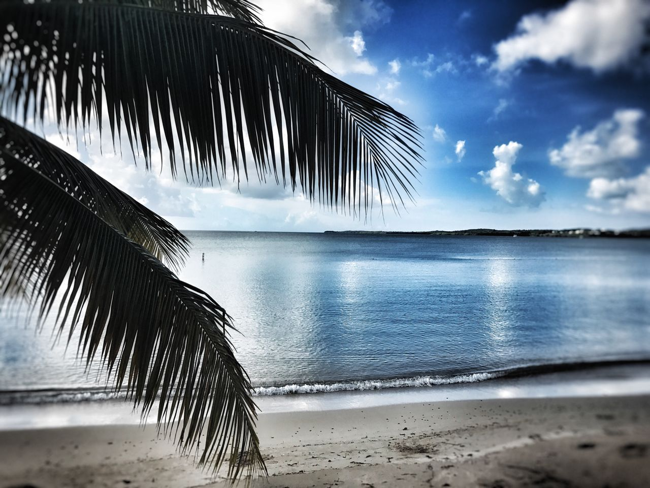 water, beach, sea, palm tree, nature, beauty in nature, scenics, sand, sky, tranquility, outdoors, no people, horizon over water, day