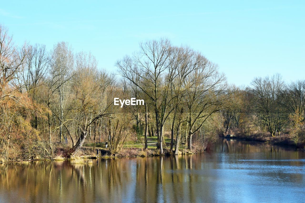 tree, water, sky, bare tree, tranquility, scenics - nature, lake, tranquil scene, beauty in nature, plant, no people, nature, waterfront, day, reflection, clear sky, non-urban scene, outdoors