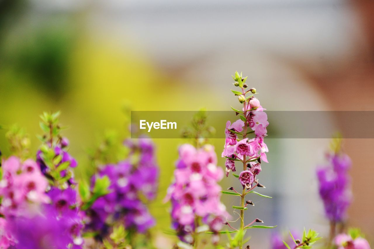 flower, flowering plant, vulnerability, fragility, freshness, plant, growth, beauty in nature, close-up, focus on foreground, animals in the wild, petal, selective focus, nature, no people, flower head, invertebrate, day, one animal, animal, purple, outdoors, lavender, pollination