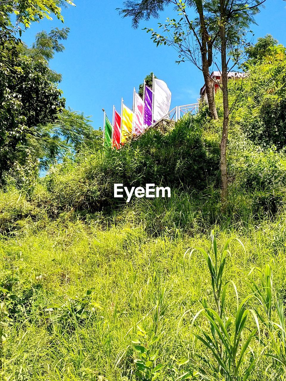 plant, tree, nature, growth, sky, multi colored, field, green color, sunlight, grass, land, day, no people, beauty in nature, outdoors, flower, environment, flowering plant, tranquility, pink color, wind, purple