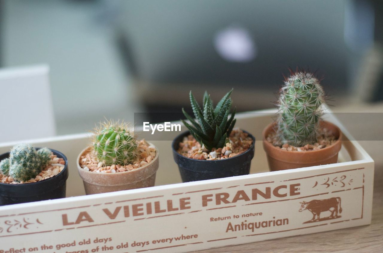 potted plant, cactus, indoors, growth, plant, green color, no people, focus on foreground, close-up, freshness, table, day, nature