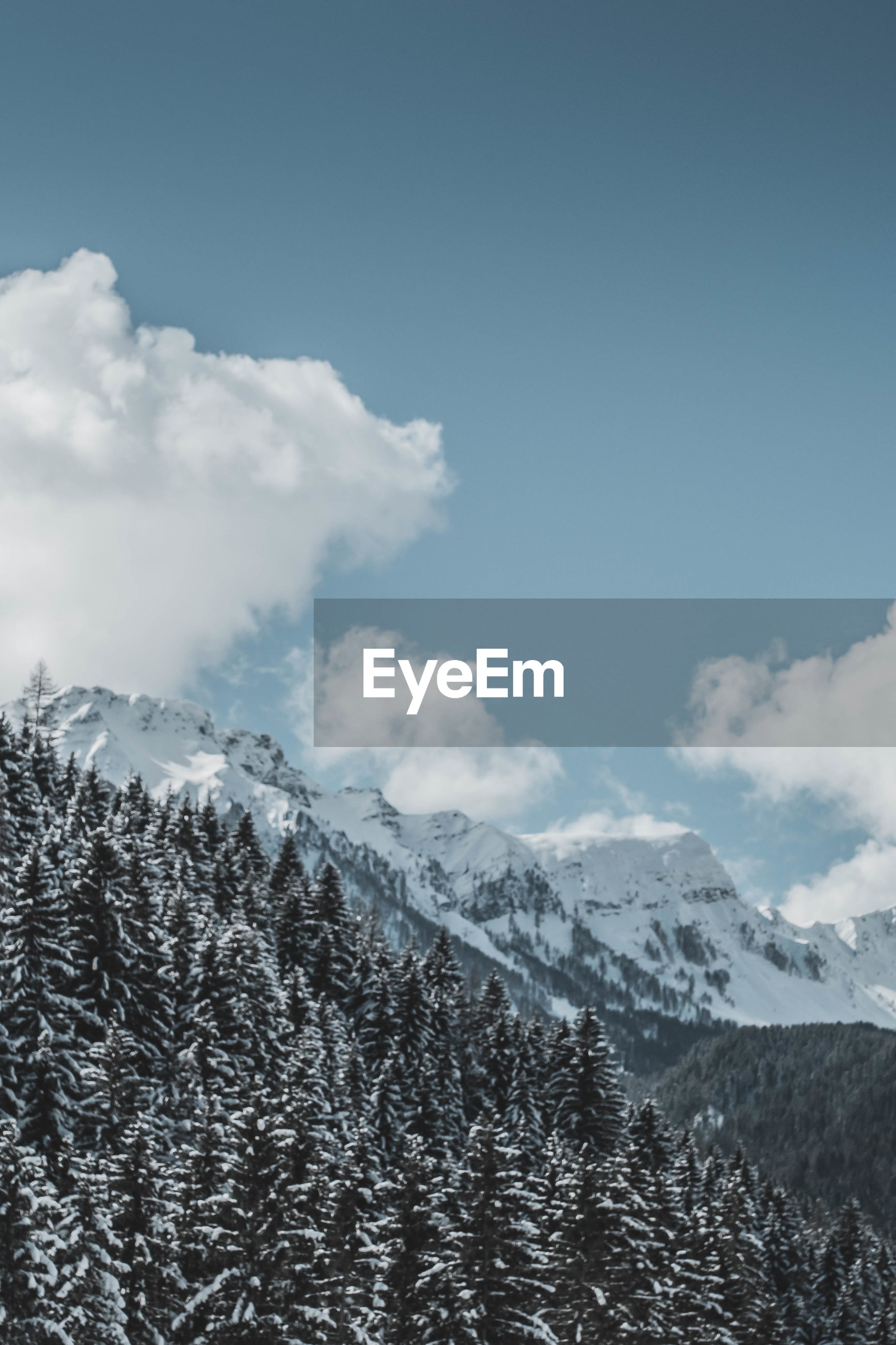 Snow covered trees on mountains against sky