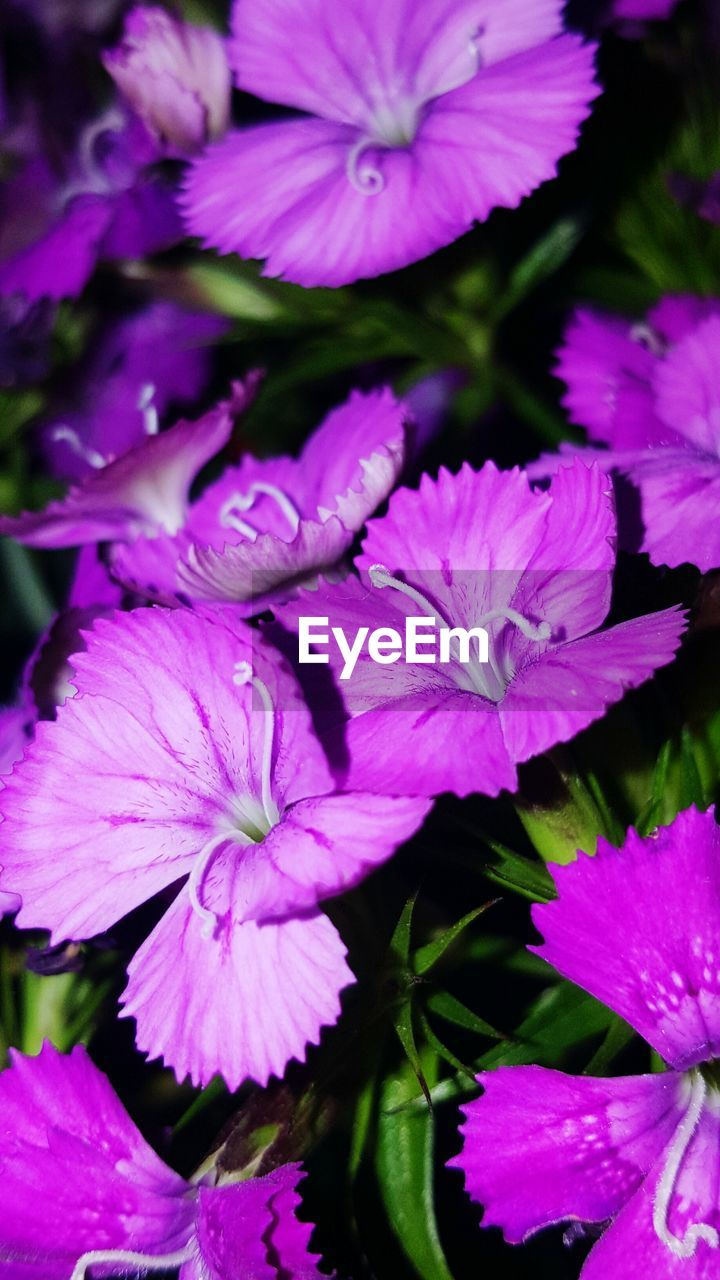 flower, petal, beauty in nature, fragility, growth, freshness, nature, plant, no people, flower head, outdoors, leaf, day, close-up, blooming