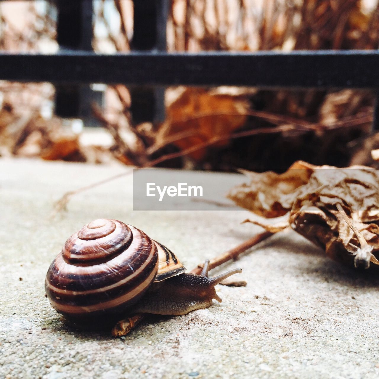 Close-Up Of Snail On Walkway