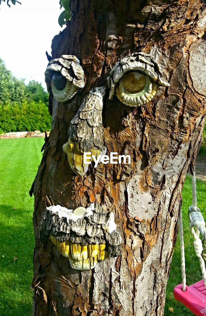 tree trunk, day, outdoors, close-up, no people, tree, nature