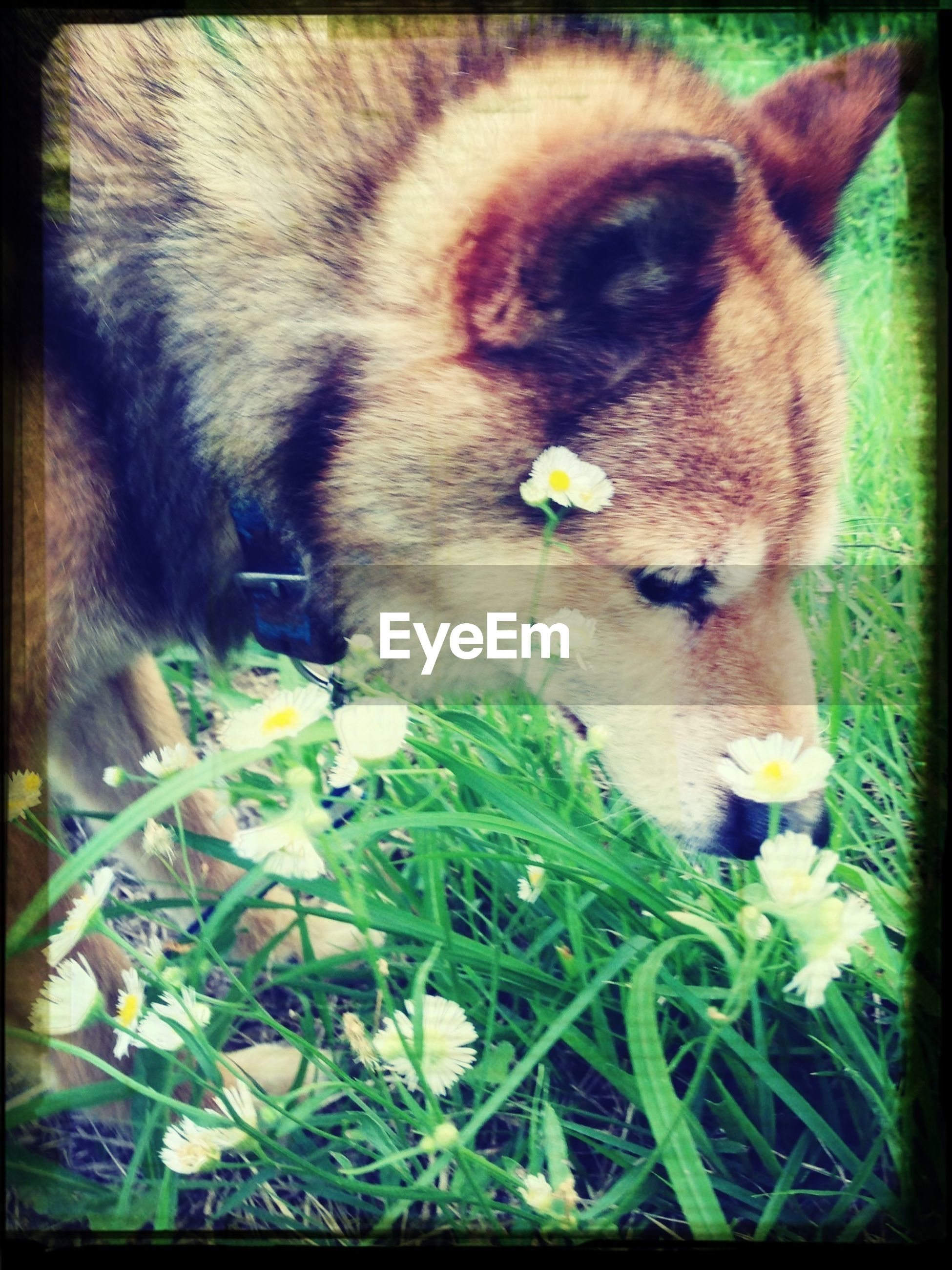 animal themes, one animal, domestic animals, mammal, pets, transfer print, auto post production filter, flower, close-up, growth, animal head, dog, nature, domestic cat, plant, no people, freshness, animal body part, day, grass