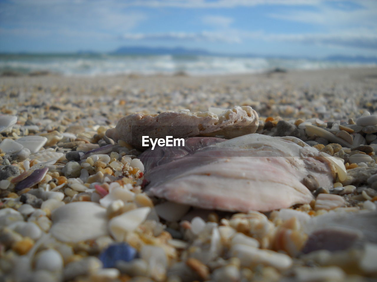 beach, selective focus, no people, land, sea, day, close-up, shell, stone, large group of objects, water, pebble, solid, rock, nature, seashell, beauty in nature, outdoors, animal, animal wildlife, surface level