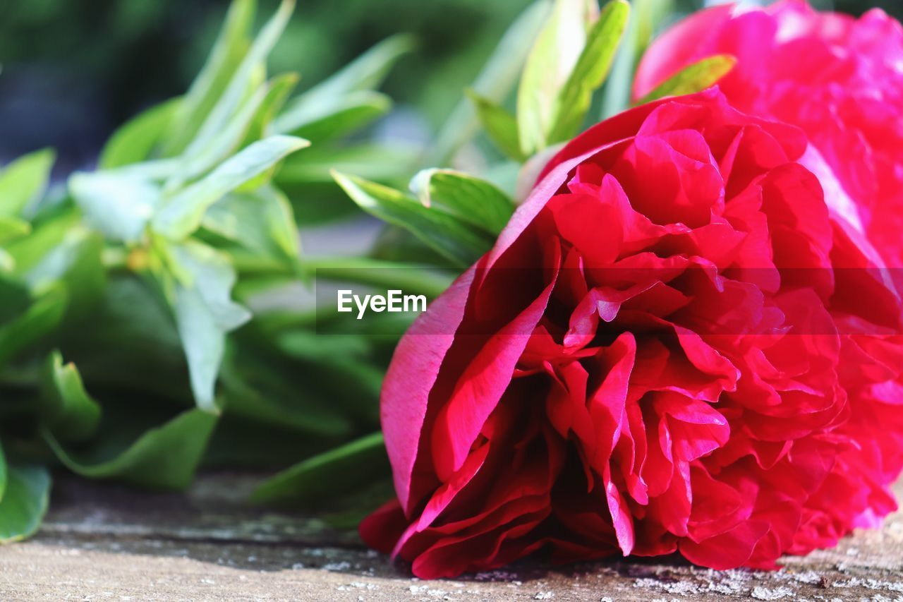 flower, beauty in nature, flowering plant, freshness, close-up, plant, fragility, petal, vulnerability, flower head, nature, inflorescence, growth, red, no people, plant part, leaf, green color, pink color, day, flower arrangement, bouquet