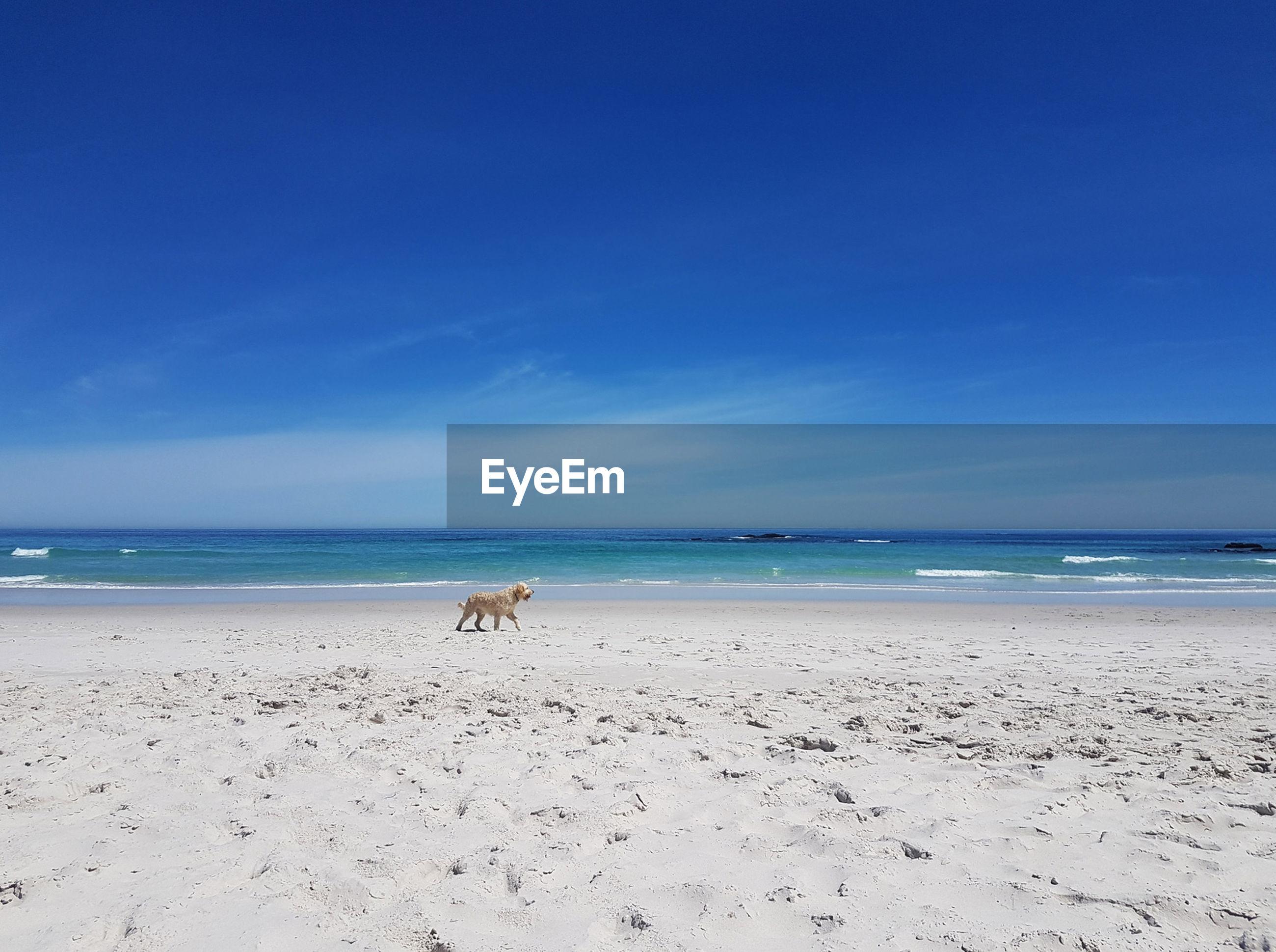 DOGS ON BEACH AGAINST BLUE SKY