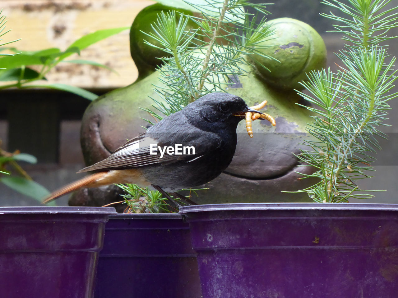 bird, vertebrate, animal, animal themes, animals in the wild, animal wildlife, day, nature, perching, one animal, plant, no people, green color, focus on foreground, potted plant, metal, outdoors, close-up, plant part, blackbird