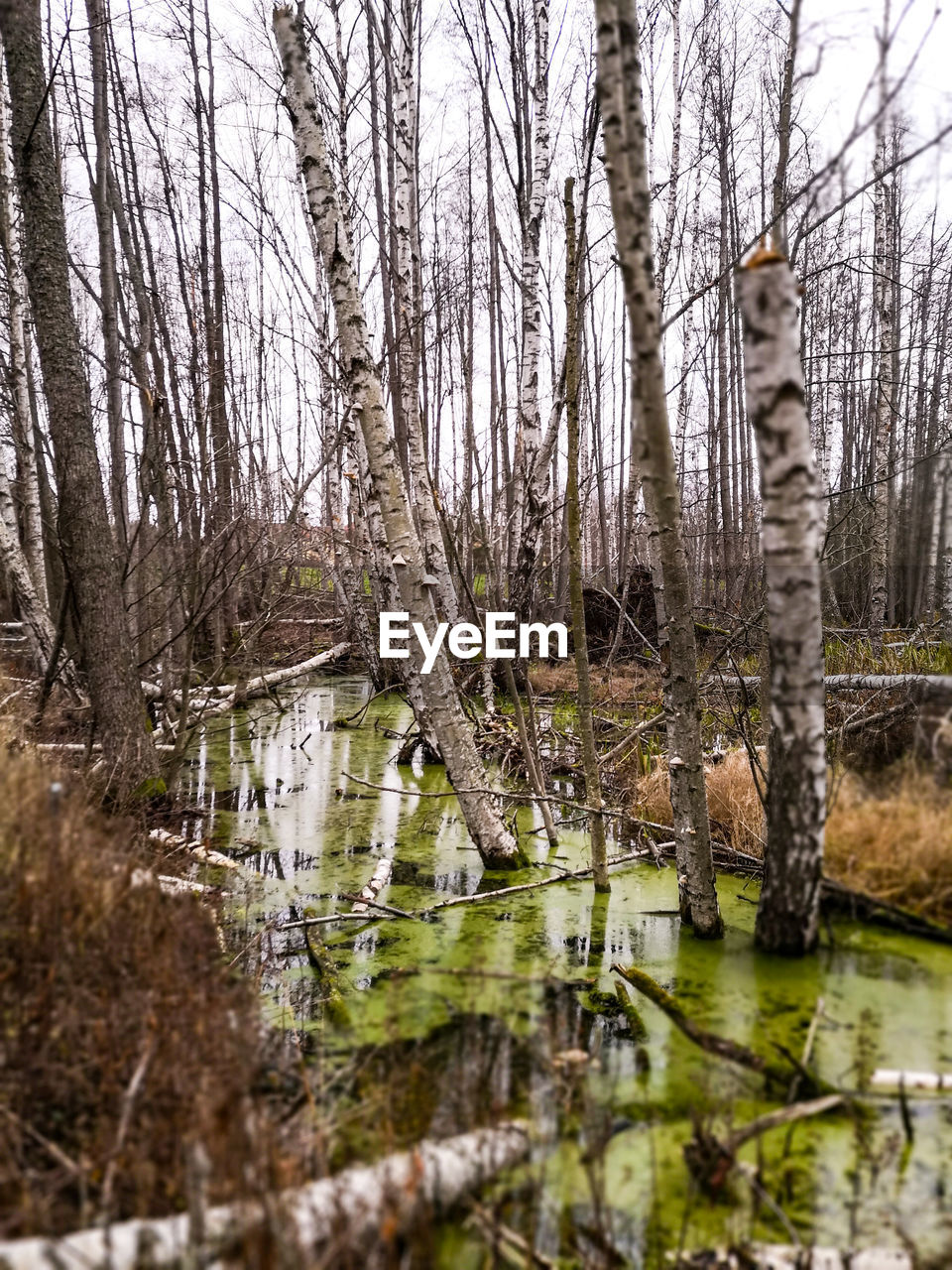 water, tree, forest, plant, tranquility, no people, nature, land, reflection, beauty in nature, lake, tree trunk, trunk, day, wetland, non-urban scene, woodland, tranquil scene, outdoors, swamp, flowing water