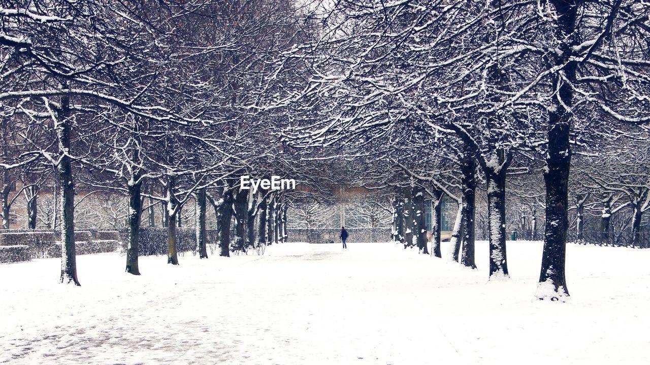 Treelined in snowy park