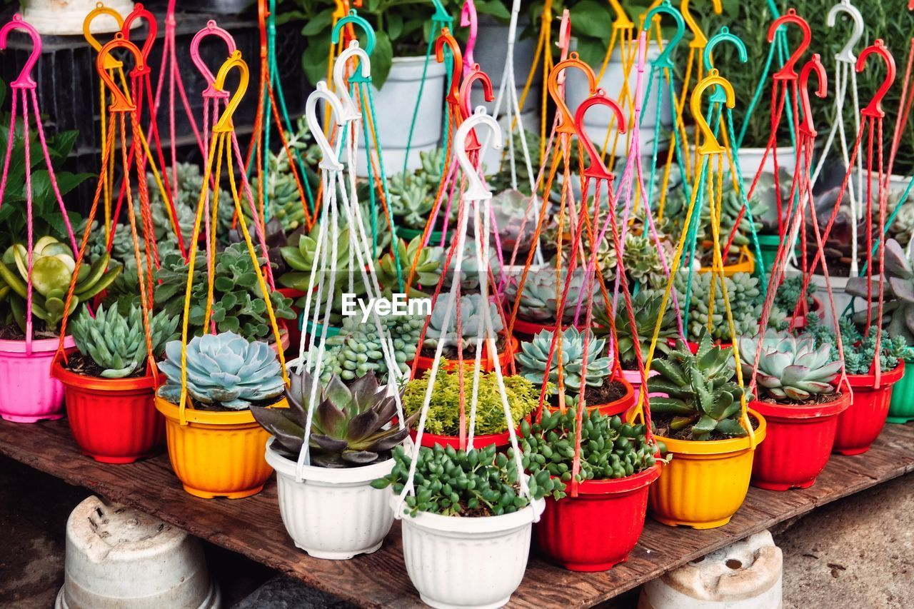 High angle view of potted plants for sale at market stall