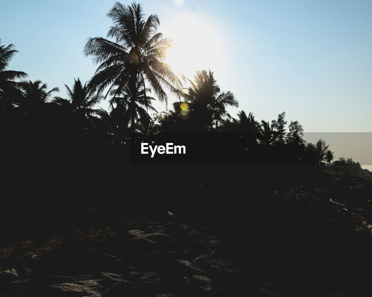 sky, tree, plant, palm tree, tropical climate, tranquility, tranquil scene, beauty in nature, scenics - nature, nature, sunlight, silhouette, no people, land, non-urban scene, growth, clear sky, sunset, outdoors, environment, coconut palm tree
