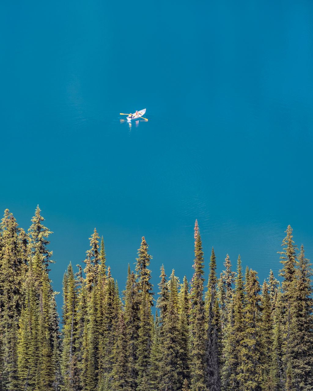 plant, tree, beauty in nature, flying, nature, sky, growth, blue, no people, low angle view, mid-air, day, mode of transportation, air vehicle, transportation, scenics - nature, tranquility, tranquil scene, airplane, clear sky, outdoors