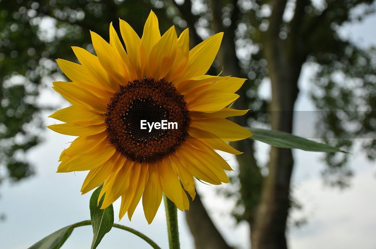 flower, yellow, petal, fragility, freshness, flower head, nature, growth, beauty in nature, sunflower, outdoors, plant, pollen, day, blooming, no people, focus on foreground, close-up, sky