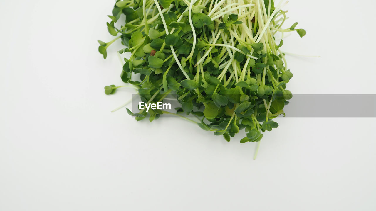 studio shot, white background, food and drink, indoors, food, healthy eating, freshness, green color, wellbeing, copy space, vegetable, still life, no people, close-up, cut out, ready-to-eat, green, plant part, high angle view, herb, coriander, chopped, vegetarian food